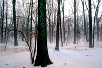 Ice and snow in a bottomland forest