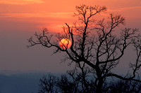 Sunset cradled in oak branches
